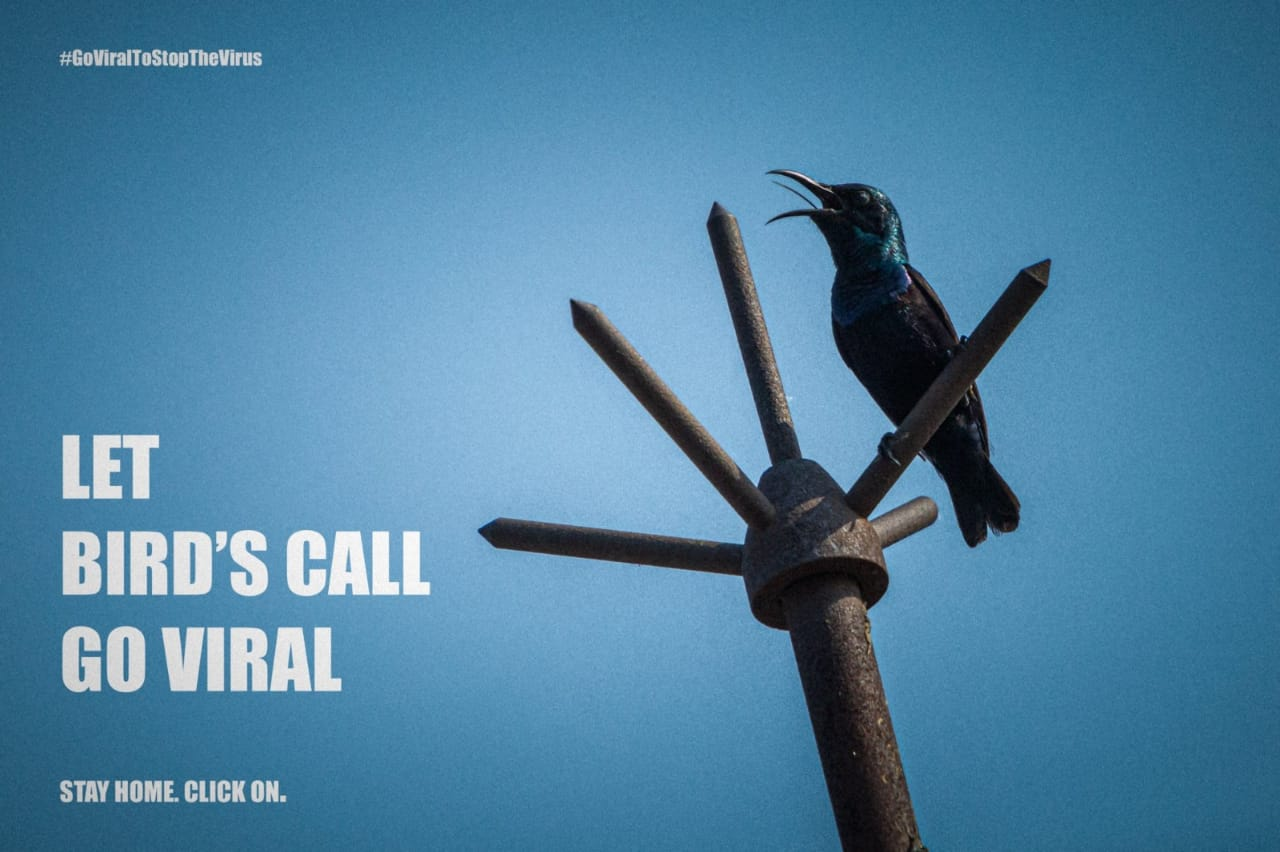 LET BIRD'S CALL GO VIRAL